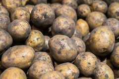 Batatas cruas saborosos, saudáveis no contador do supermercado fotos de stock royalty free