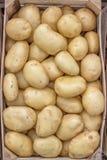 Batatas do mercado dos fazendeiros em um fundo da caixa de madeira Imagens de Stock Royalty Free