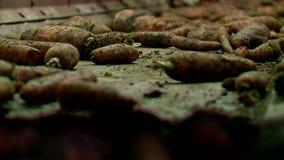 Batatas e cenouras vegetais da loja no transporte vídeos de arquivo