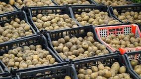 Batatas frescas na caixa Casa do armazenamento Fotos de Stock