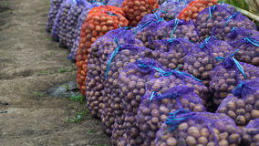Batatas frescas nos sacos Casa do armazenamento Fotografia de Stock