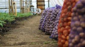 Batatas frescas nos sacos Casa do armazenamento Fotografia de Stock Royalty Free