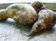 Batatas L de Yam Sweet Potato Ipomoea Imagen de archivo libre de regalías