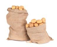 Batatas maduras em uns sacos de serapilheira fotos de stock royalty free