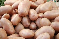 Batatas no mercado Fotografia de Stock Royalty Free