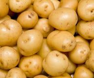 Batatas novas