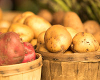 Batatas orgânicas na cesta foto de stock royalty free