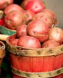 Batatas orgânicas na cesta fotografia de stock