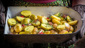 Batatas recentemente cozidas com alho e ervas Imagem de Stock Royalty Free