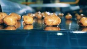 Batatas Unpeeled que movem-se no transporte industrial em uma fábrica especial vídeos de arquivo