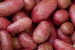 Batatas vermelhas Imagens de Stock