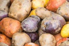 Batatas vermelhas, brancas, e azuis fotos de stock