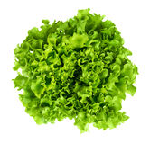 Batavia head of lettuce from above on white background Stock Photo