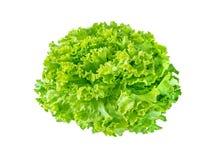 Batavia lettuce salad rosette. Isolated on white. Green leafy veggie stock photos