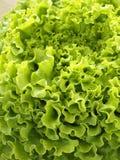 batavia organicznie Zdjęcie Stock