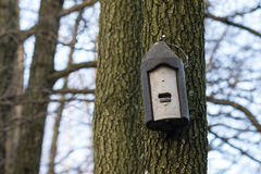 Batbox made of wood concrete hanging on a tree Royalty Free Stock Photos