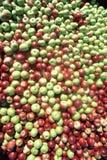 Batch of apples Stock Photo