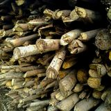 A batch of dry firewood. Biomass, brown, plant, tree, closeup, energy, wooden, pile, stack, raw, organic, natural, forest, material royalty free stock photo