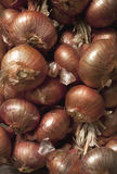 Batch of drying red onion. Royalty Free Stock Photo