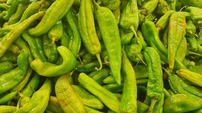 Green hatch chilis ready for sale. stock image