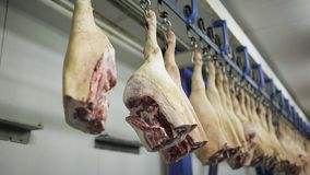 A batch of hog carcasses hanging on metal hooks. production of meat products. Pork carcasses hanging on hooks in a meat factory. Pigs in slaughterhouse stock footage
