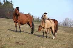 Batch of horses on autumn pasturage Stock Photo
