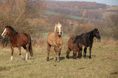 Batch of horses on autumn pasturage Stock Images