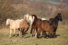 Batch of horses on autumn pasturage Royalty Free Stock Image