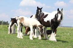 Batch of horses on pasturage Stock Photos