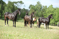 Batch of horses on pasturage Royalty Free Stock Images