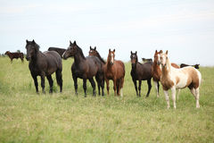Batch of horses resting on pasturage Royalty Free Stock Photo