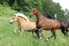 Batch of horses running Royalty Free Stock Photos