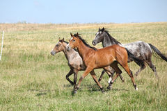 Batch of horses running on pasturage Royalty Free Stock Photos