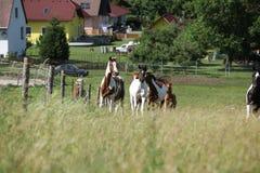 Batch of horses running on pasturage Stock Image