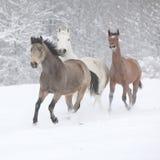 Batch of horses running in winter