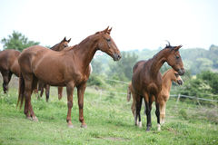 Batch of horses standing on pasturage Stock Image