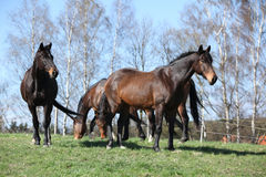 Batch of horses standing on pasturage Royalty Free Stock Images