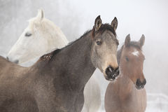 Batch of horses in winter Royalty Free Stock Photos