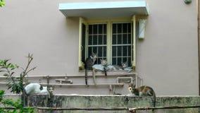 Bate-papo dos gatos Imagens de Stock Royalty Free