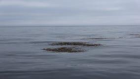 Bateau à voile dans la mer d'Okhotsk banque de vidéos