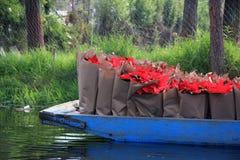 Bateau de canal complètement des sacs de la poinsettia fraîche - fleur de Noël/Noël dans Xochimilco Photos libres de droits