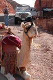 Bateau de désert Photos libres de droits
