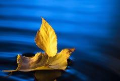 Bateau de feuille dans l'eau bleue Image libre de droits