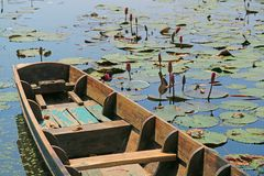 Bateau en bois sur un étang complètement de Lotus Flower Buds et des feuilles images stock