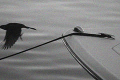 Bateau et oiseau Images stock