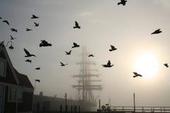 Bateau grand avec des oiseaux Images stock