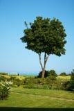 Bateau sur la mer encadrée avec des arbres Photo libre de droits