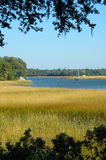 Bateaux à voiles encadrés de marais Photos libres de droits