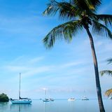 Bateaux à voiles et palmier Photos libres de droits