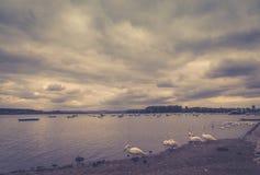 Bateaux de pêche de Danube de rivière petits, cygnes, effet de brume image stock